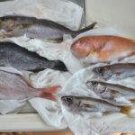 平戸市の地魚Aセット(1月)の中身