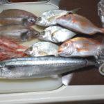 浜田市の海産物・6種類